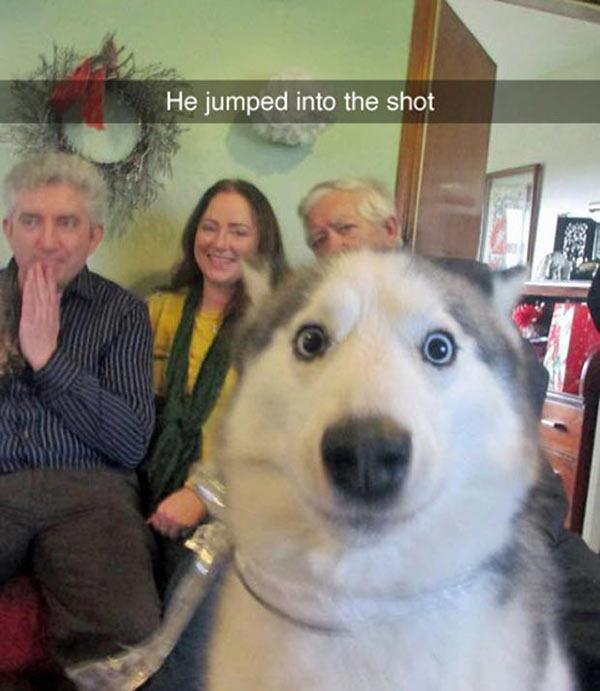 Image of: Memes Jokes Dog Photobomb Funny Snapchat Humor Omg Memes 23 Of The Most Hilarious Snapchats Ever Sent Omg Memes