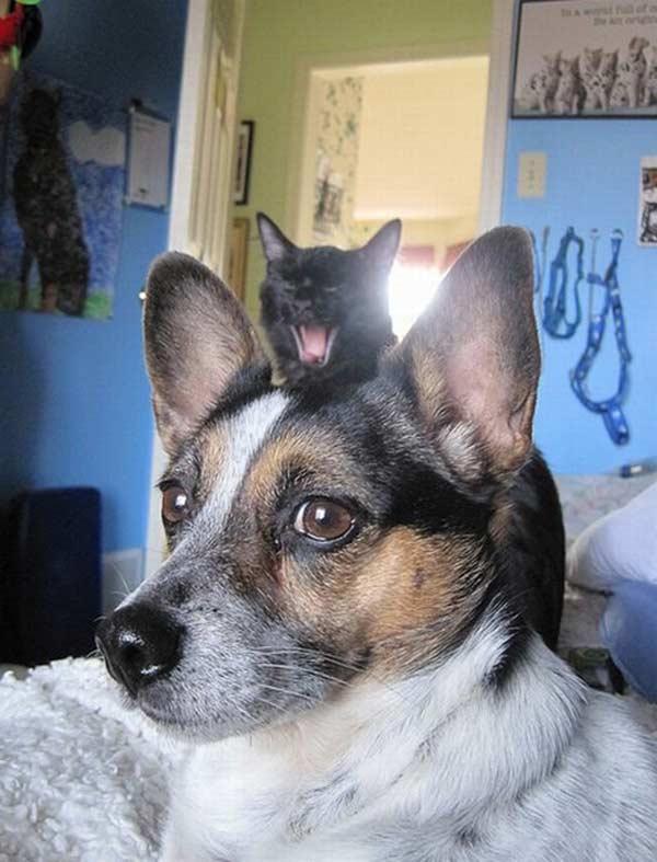 Epic Cat Photobombs From Funny Feline Evildoers Team Jimmy Joe - 20 hilarious cat photobombs