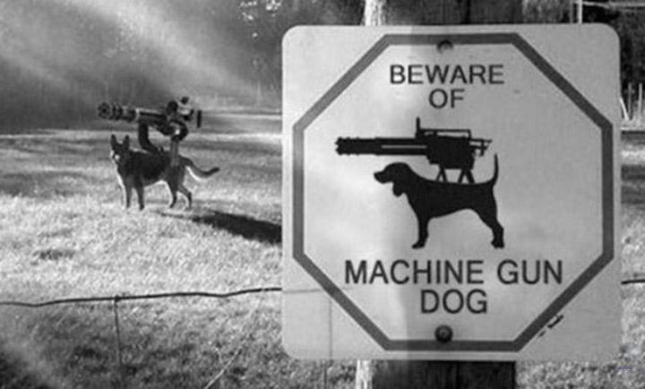 Beware of Machine Gun Dog