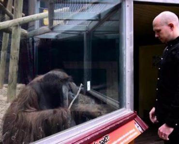 guy performs magic trick for orangutan