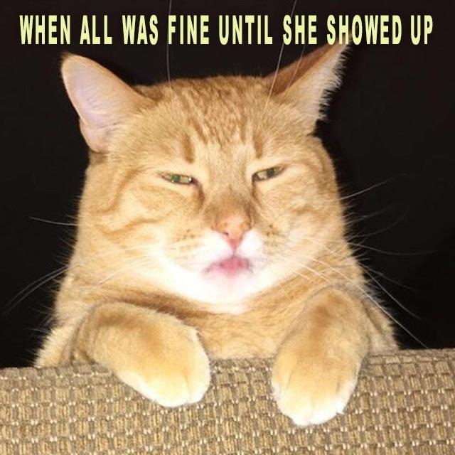 Cat Wicked Meme